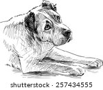 sketch of a sad dog | Shutterstock .eps vector #257434555