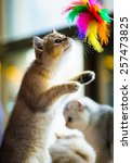 Stock photo cute playful kitten 257473825
