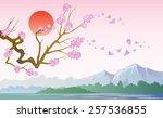 japanese blossom sakura on a... | Shutterstock .eps vector #257536855