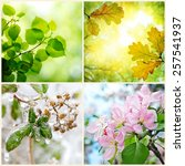 four seasons. a pictures that...   Shutterstock . vector #257541937
