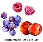 watercolor image of plums ... | Shutterstock . vector #257575339