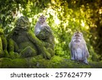 monkey at sacred monkey forest  ... | Shutterstock . vector #257624779