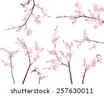 cherry blossom branches | Shutterstock .eps vector #257630011