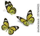 three yellow monarch butterfly  ... | Shutterstock . vector #257634421