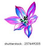 single watercolor lily flower.... | Shutterstock . vector #257649205