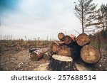 Felled Timber In The Forest