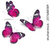 three pink butterfly  isolated... | Shutterstock . vector #257688589