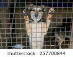 shelter for homeless dogs ... | Shutterstock . vector #257700844
