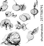 vector illustration   bunch of... | Shutterstock .eps vector #257708791