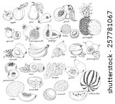 collection of fruit in sketch... | Shutterstock .eps vector #257781067