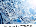 Frozen Tree Branches With Blue...