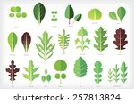 Set Of Salad Greens Vector....