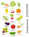 fresh ripe vegetables from the... | Shutterstock .eps vector #257819995