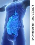 male anatomy concept digestive... | Shutterstock . vector #257882075
