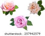 illustration with rose flowers...   Shutterstock .eps vector #257942579
