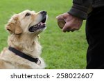 Stock photo dog obedience training 258022607