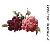 bouquet of peonies  watercolor  ... | Shutterstock . vector #258040655