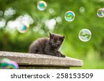 Stock photo little black kitten and soap bubbles 258153509