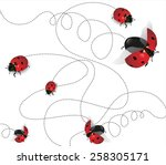 Ladybugs On White Background...