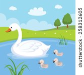 Farm. Swan And Baby Swans....