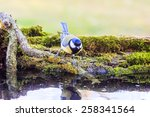 titmouse spring wild out in... | Shutterstock . vector #258341564