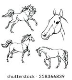 horse. b   w vector drawing.