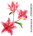 watercolour lilies on white... | Shutterstock . vector #258368024