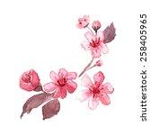 watercolor blossom cherry tree... | Shutterstock . vector #258405965