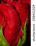 red roses | Shutterstock . vector #258421529
