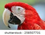 Beautiful Bird  Closeup...