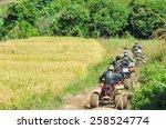 chiang mai  thailand   november ... | Shutterstock . vector #258524774