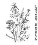 Hand Drawn Herbal Flowers...