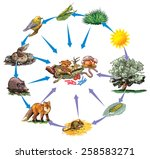 food chain | Shutterstock .eps vector #258583271