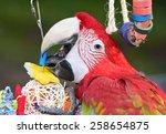 Parrot. Bird Toys