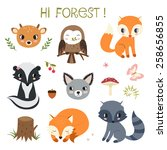 woodland animals and decor... | Shutterstock . vector #258656855
