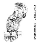 vector illustration of a parrot ...   Shutterstock .eps vector #258683915