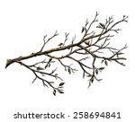 ink hand drawn branch  autumn... | Shutterstock . vector #258694841