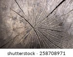 tree annual ring | Shutterstock . vector #258708971