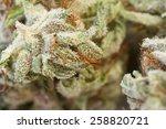 macro shot of a dried marijuana ...   Shutterstock . vector #258820721