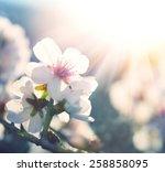 Springtime. Spring Flowers...