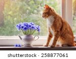 Stock photo red cat looks at a bouquet of cornflowers 258877061