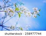 Floral Spring Background Branch ...