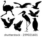 set of silhouettes of different ... | Shutterstock .eps vector #259021601