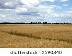 wheat field  summer | Shutterstock . vector #2590340
