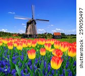 Colorful Spring Flowers With...