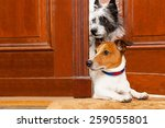 Stock photo couple of dogs watching and looking at the door at home on the doormat 259055801
