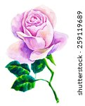 watercolor rose with green... | Shutterstock .eps vector #259119689