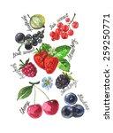 berries   Shutterstock .eps vector #259250771