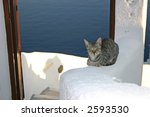 Guard Cat With The Sea...
