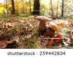 two mushrooms growing in neat... | Shutterstock . vector #259442834
